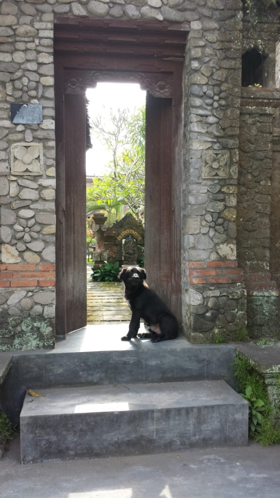 Bali Dog in Ubud