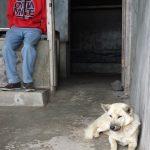 Man and Dog on Mt Batur