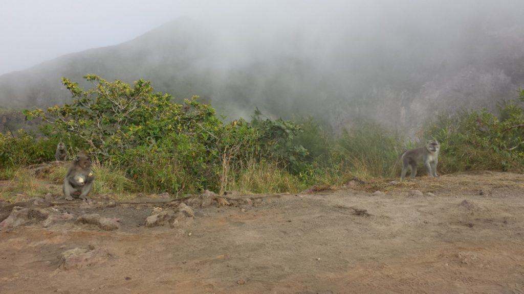 Monkeys on Mt Batur