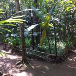 Santi Coffee Plantation