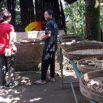 Worker at Santi Coffee Plantation