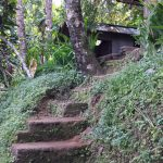 Stairs at Coffee Plantation